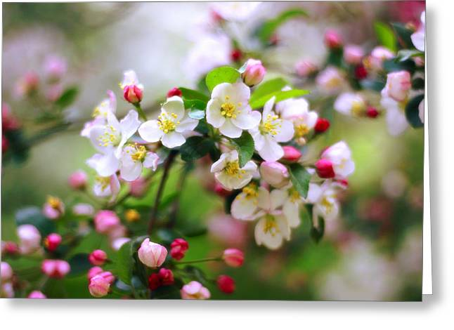 Apple Blossom Greeting Cards - Apple Blossom Greeting Card by Jessica Jenney
