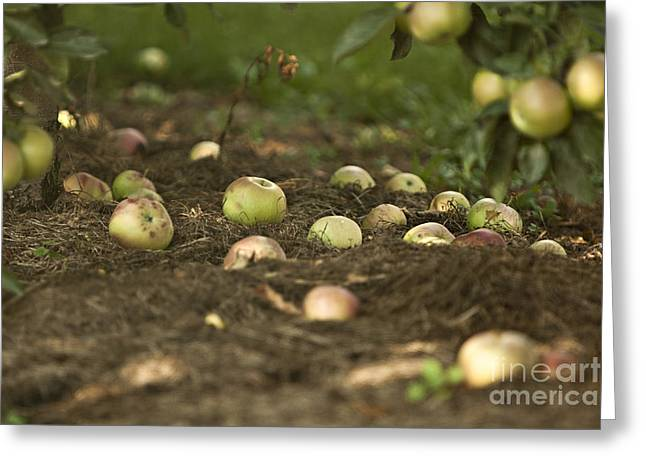 The Agricultural Life Greeting Cards - Apple Tree Greeting Card by Dan Radi