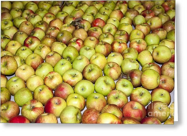Apples Greeting Card by Steven Ralser
