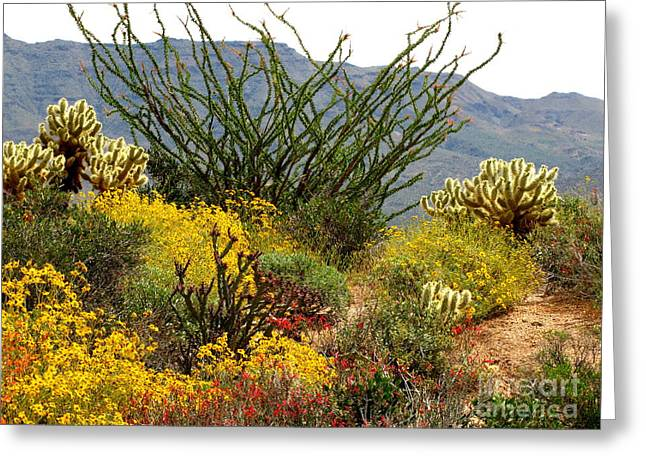 Buggy Whip Greeting Cards - Arizona Springtime Greeting Card by Marilyn Smith