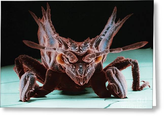 Scanning Electron Micrograph Greeting Cards - Armored Bug Greeting Card by David M. Phillips