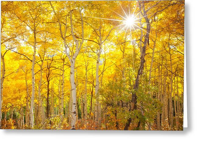 Autumn Prints Greeting Cards - Aspen Morning Greeting Card by Darren  White
