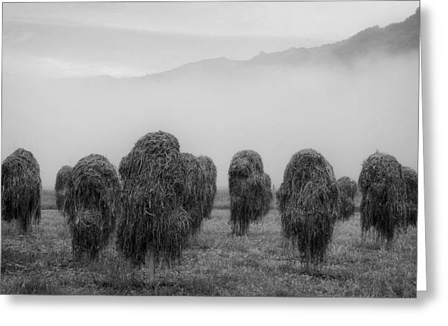 Moist Greeting Cards - Austrian Staked Hay Greeting Card by Mountain Dreams