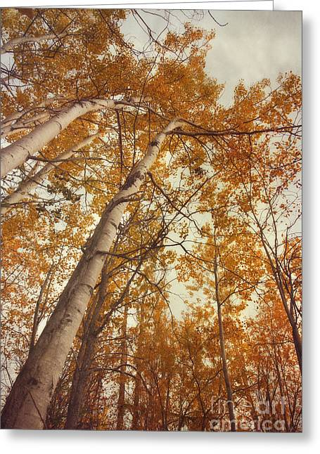 Whispers Greeting Cards - Autumn Aspens Greeting Card by Priska Wettstein