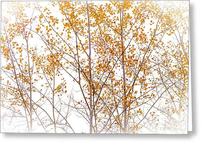 Barbara Smith Greeting Cards - Autumn Birch Greeting Card by Barbara Smith