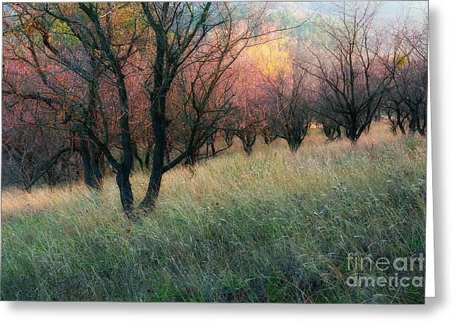 Igor Baranov Greeting Cards - Autumn colors Greeting Card by Igor Baranov
