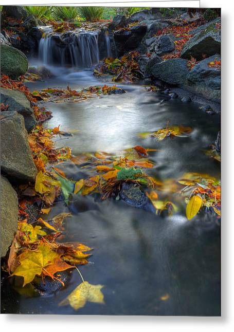 Autumn Creek Greeting Card by Matt Dobson