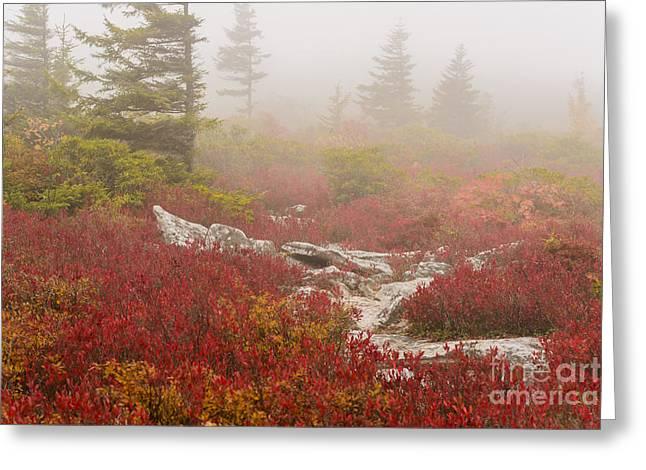 Sod Greeting Cards - Autumn Fog Bear Rocks Greeting Card by Thomas R Fletcher