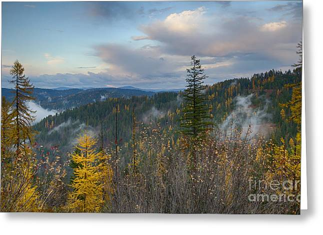 North Idaho Greeting Cards - Autumn Forest Greeting Card by Idaho Scenic Images Linda Lantzy