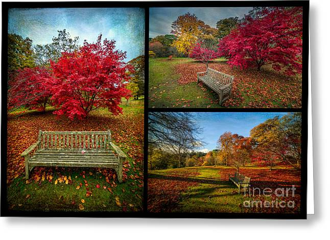 Acer Greeting Cards - Autumn in the Park Greeting Card by Adrian Evans