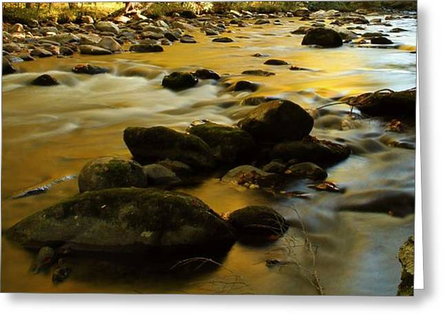 Tennesee Greeting Cards - Autumn In The Water Greeting Card by Dan Sproul