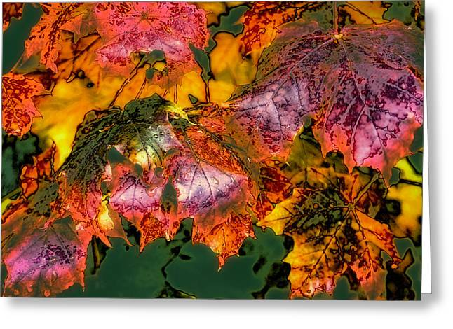 Surreal Landscape Greeting Cards - Autumn Leaves Greeting Card by David Patterson