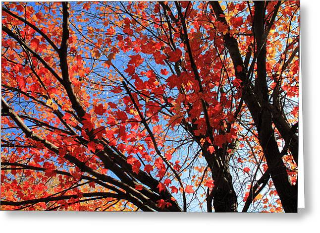 November Framed Prints Greeting Cards - Autumn Leaves Greeting Card by Frank Romeo