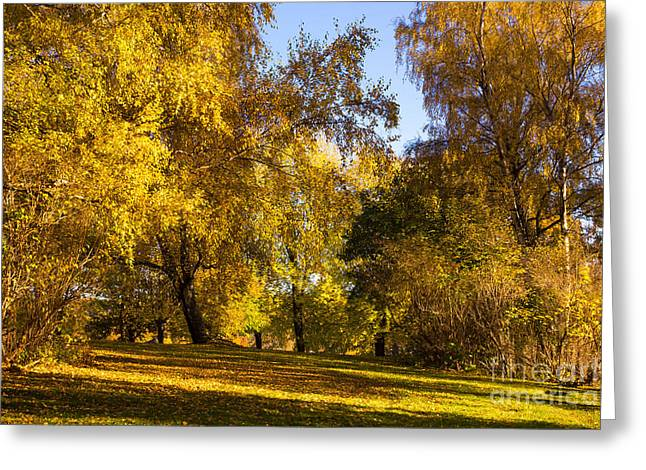Late-summer Greeting Cards - Autumn Light Greeting Card by Lutz Baar