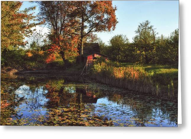 Lilly Pad Greeting Cards - Autumn Palette Greeting Card by Joann Vitali
