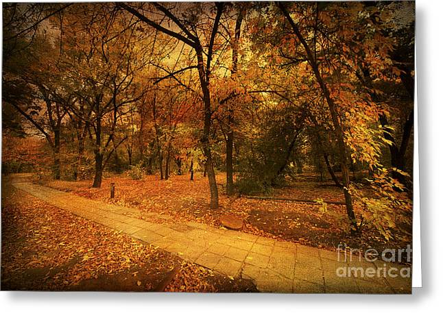 Tree In Golden Light Greeting Cards - Autumn Path Greeting Card by Svetlana Sewell