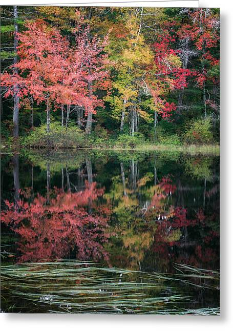 Autumn Landscape Photographs Greeting Cards - Autumn Pond Greeting Card by Bill  Wakeley