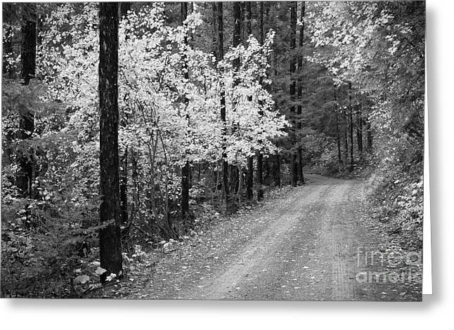 Gray Scale Greeting Cards - Autumn Road Greeting Card by Idaho Scenic Images Linda Lantzy