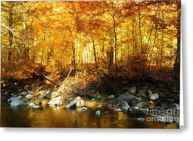Evening Lights Greeting Cards - Autumn Stream Greeting Card by HD Connelly