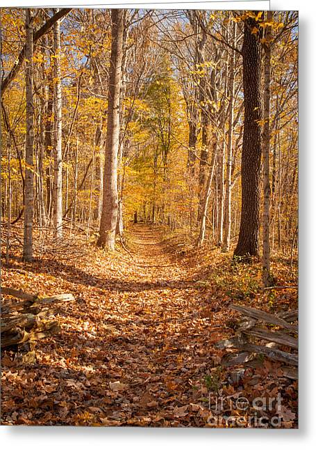 Natchez Trace Parkway Greeting Cards - Autumn Trail Greeting Card by Brian Jannsen