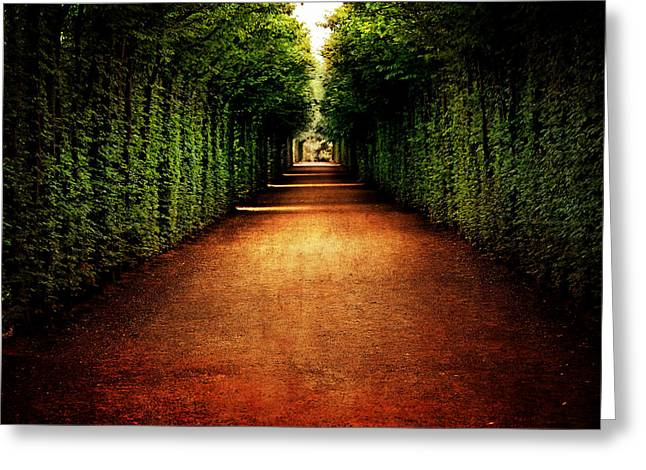 Walk Paths Mixed Media Greeting Cards - Avenue trees Greeting Card by Heike Hultsch