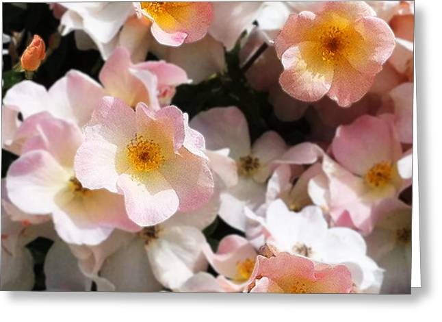 Houzz Greeting Cards - Balboa Island Roses Greeting Card by Gayland Isley