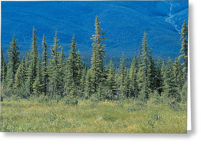 Conifer Tree Greeting Cards - Banff National Park Alberta Canada Greeting Card by Panoramic Images