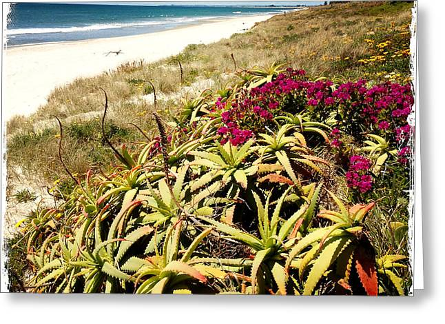 Coastline Flowers Greeting Cards - Beach Greeting Card by Les Cunliffe