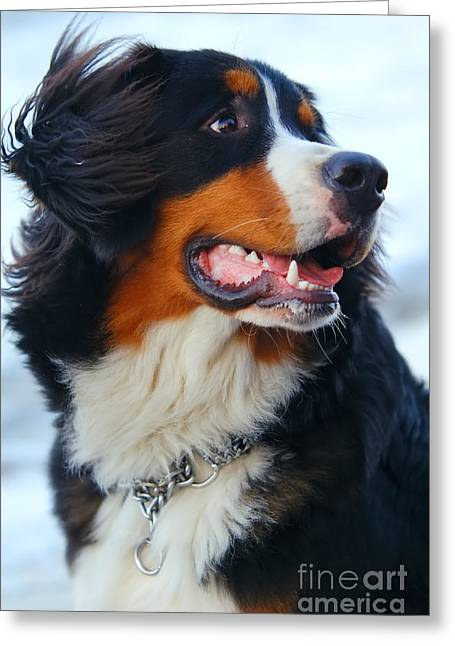 Collar Greeting Cards - Beautiful dog portrait Greeting Card by Michal Bednarek
