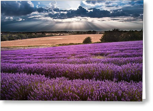 Beautiful Lavender Field Landscape With Dramatic Sky Greeting Card by Matthew Gibson