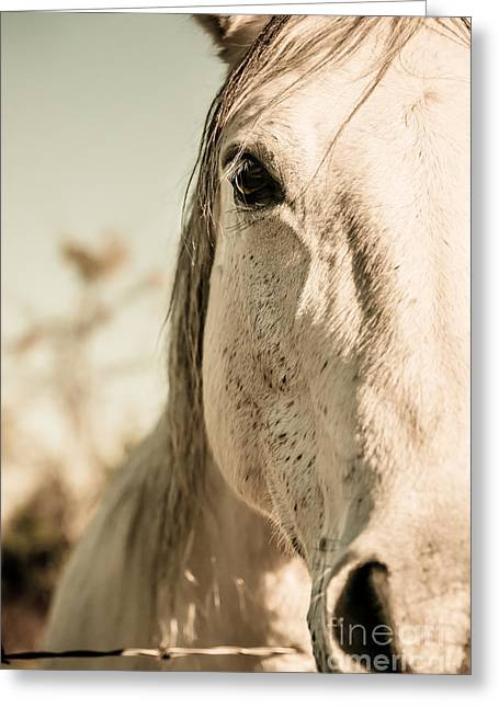 Beautiful Equine Photos Fine Art Greeting Cards - Beauty Greeting Card by Christina Klausen