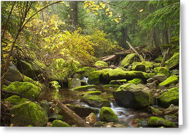 Beauty Creek Greeting Card by Idaho Scenic Images Linda Lantzy