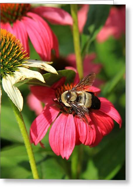 Bee Nice Greeting Card by Reid Callaway