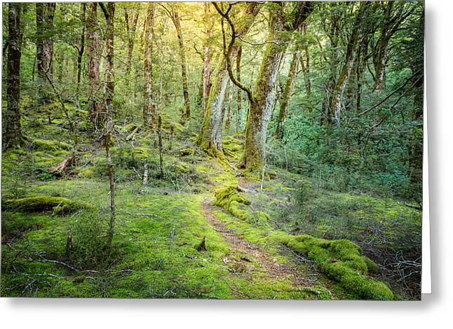 Moss Green Greeting Cards - Beech Forest Greeting Card by Alexey Stiop