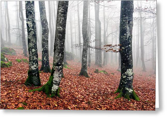 Forests Greeting Cards - Beech Forest With Fog In Autumn Greeting Card by Mikel Martinez de Osaba