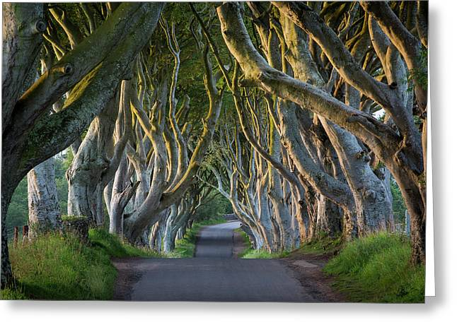 Beech Tree-lined Road Known As The Dark Greeting Card by Brian Jannsen