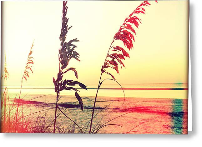 Sea Oats Greeting Cards - Before Day Greeting Card by Chris Andruskiewicz