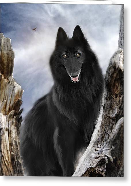 Shepherds Greeting Cards - Belgian Shepherd Groenendael 2 Greeting Card by Wolf Shadow  Photography