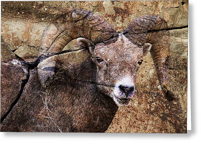 Sheep On Rocks Greeting Cards - Bighorn Rock Greeting Card by Steve McKinzie