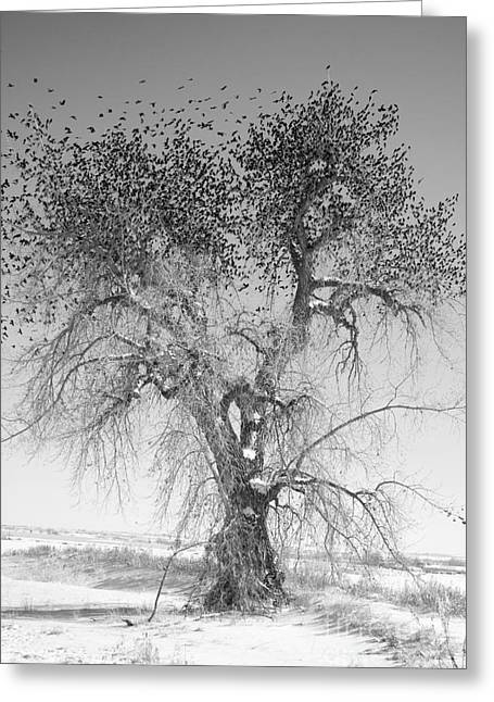 Wildlife Art Metal Prints Greeting Cards - Birdland 1 Black and white Greeting Card by James BO  Insogna