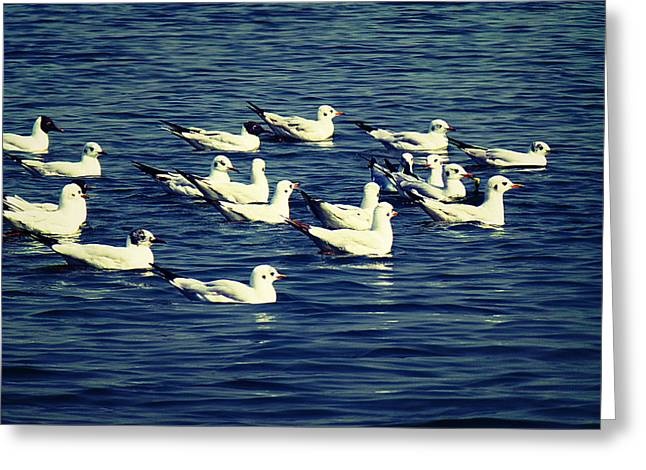 River Photographs Pyrography Greeting Cards - Birds in River Greeting Card by Girish J
