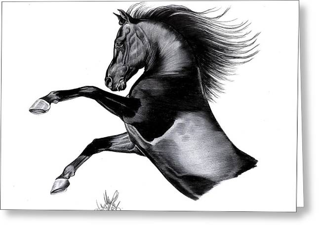 Horse Drawing Greeting Cards - Black Arabian Mare Greeting Card by Cheryl Poland