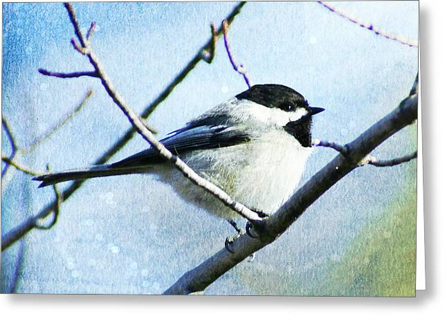 Sunset Greeting Cards Greeting Cards - Black Capped Chickadee Greeting Card by Carol Toepke