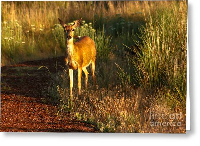 Haybales Greeting Cards - Blacktail  Doe Greeting Card by Robert Bales