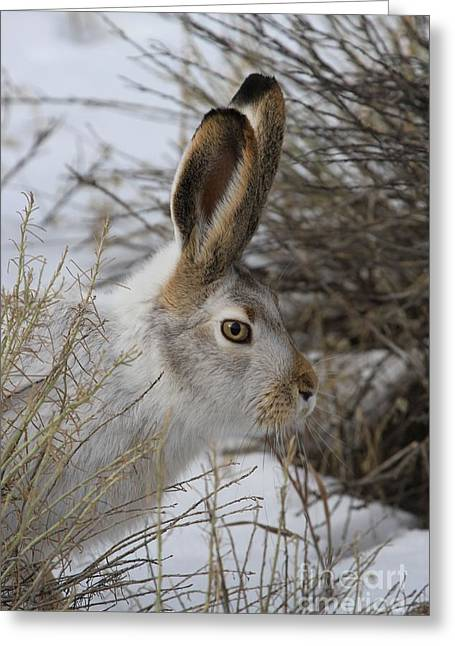 Jack Rabbit Greeting Cards - Blending In Greeting Card by Adam Jewell