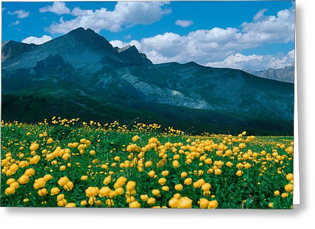 Champs Photographs Greeting Cards - Blooming Buttercup Flowers In A Field Greeting Card by Panoramic Images