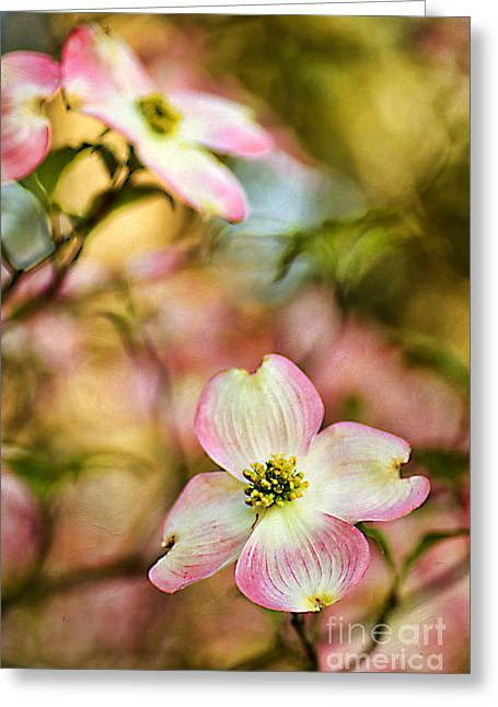 Blooms Of Spring Greeting Card by Darren Fisher