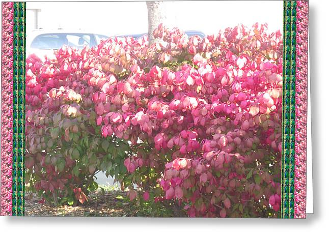 Ontario Sports Art Greeting Cards - Blossom Pink before fall colors in Oakville Ontario Canada  appreciating nature it deserves a great  Greeting Card by Navin Joshi