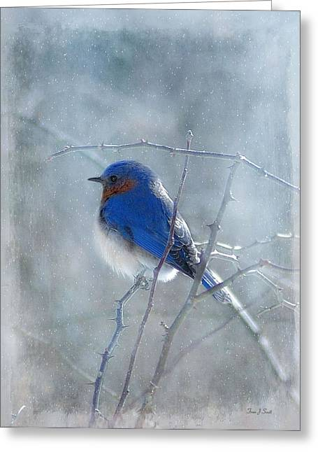 Cold Greeting Cards - Blue Bird  Greeting Card by Fran J Scott