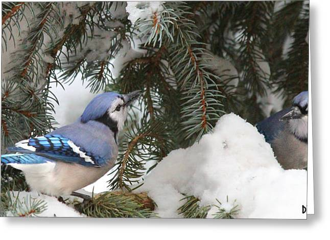 Feeder Framed Prints Greeting Cards - 2 Blue Jays Are Better than 1 Greeting Card by Diane V Bouse